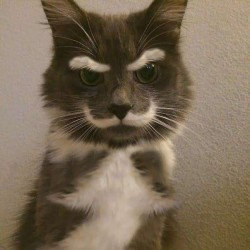 Funny Cat Gets in on the Movember Movement