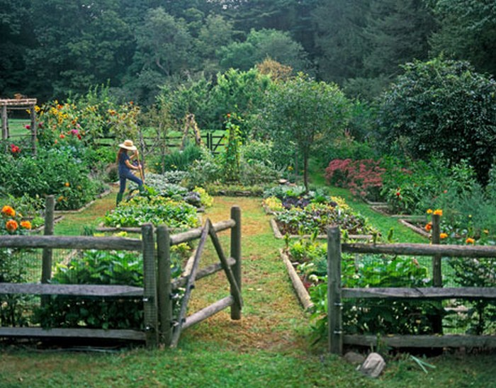 Vegetable Garden Makes Me Want a Fence • Clattr