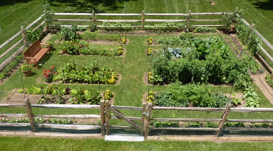 Gorgeous Fenced Vegetable Garden Clattr