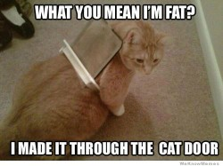 What do you mean I'm fat?