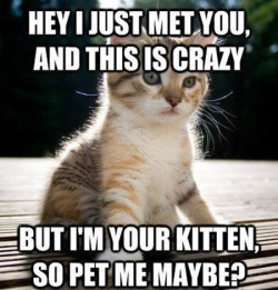 I'm your kitten, so pet me maybe?