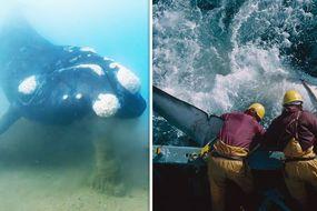30-foot creature couldexplain lost ships in Bermuda Triangle