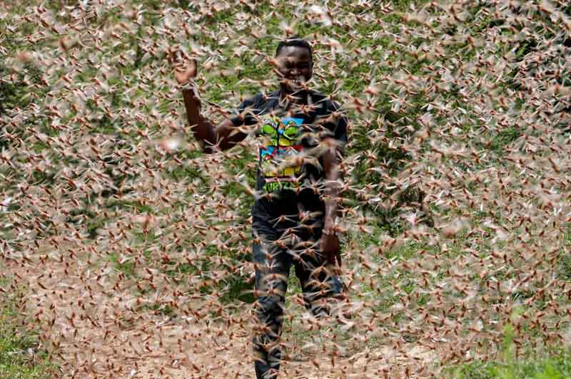 Huge locusts swarm Somalia resulting in a national emergency