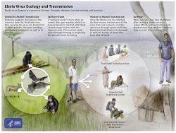 Ebola Virus Disease Explained
